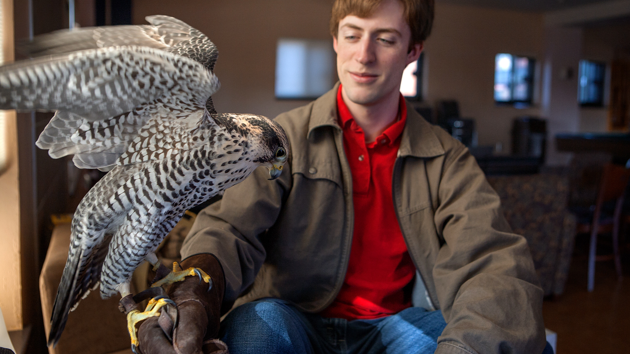 raptor is perched on the arm of a student