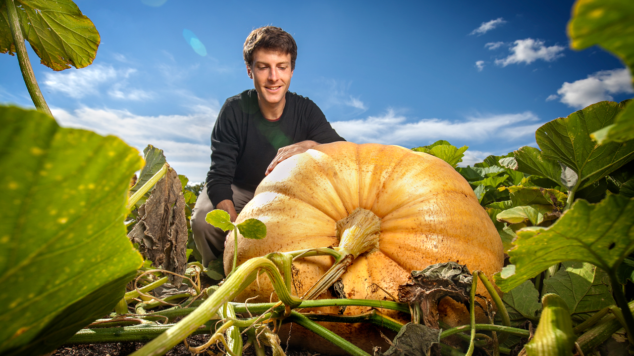 student examines a pumpkin in the garden